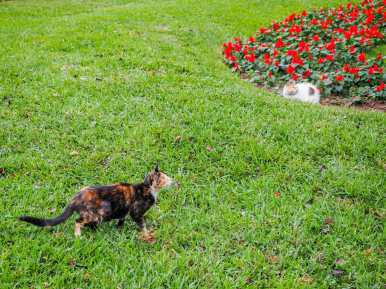 Cats in Parque Kennedy