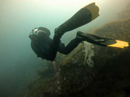 Diving in Milford Sound