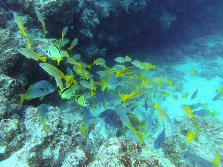 Colourful fish at Isla Bartolomé