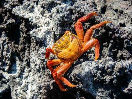 Crabs on Isla Bartolomé