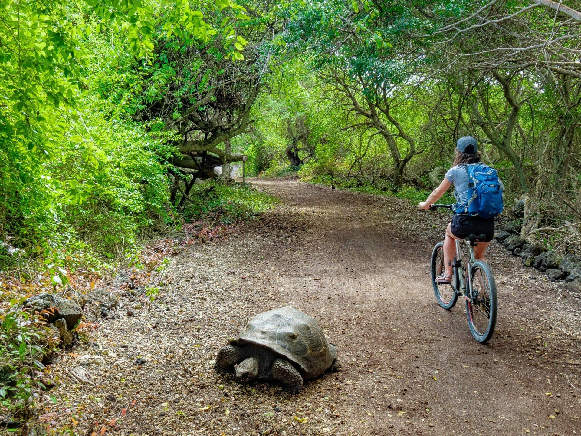 Girl riding bike next to giant Galápagos tortoise on road