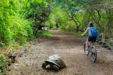 Girl riding bike next to giant Galápagos tortoise on road
