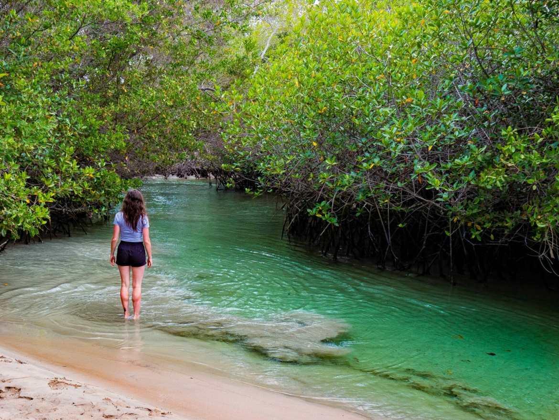 Girl standing in green estuary with mangroves