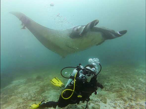 Diving with Manta Ray in Bajo Cope, Ayangue