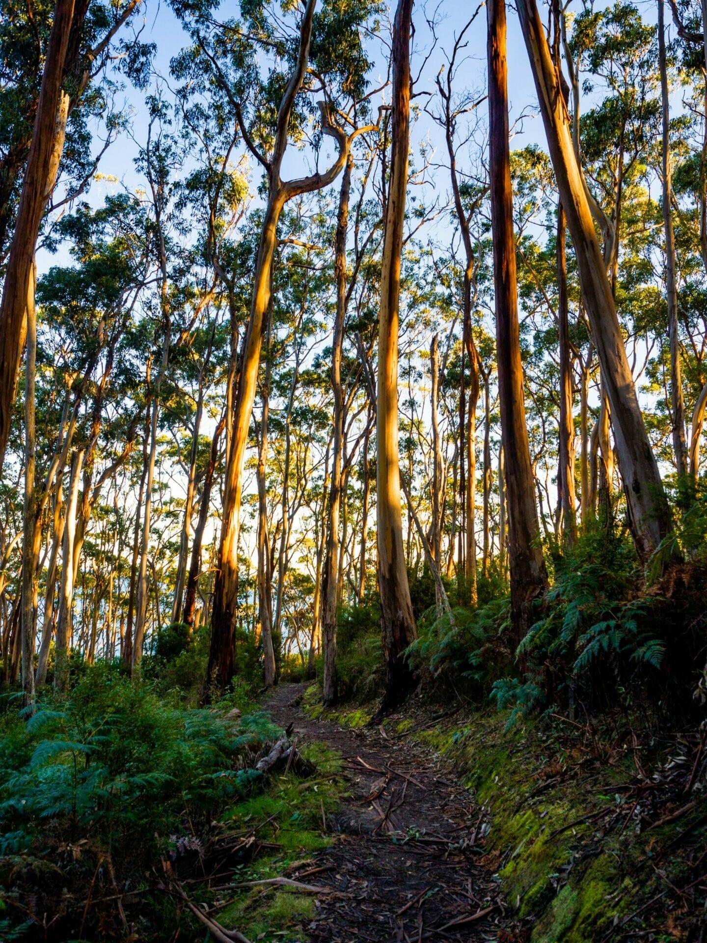 Great Ocean Walk hike Australia Otway National Park
