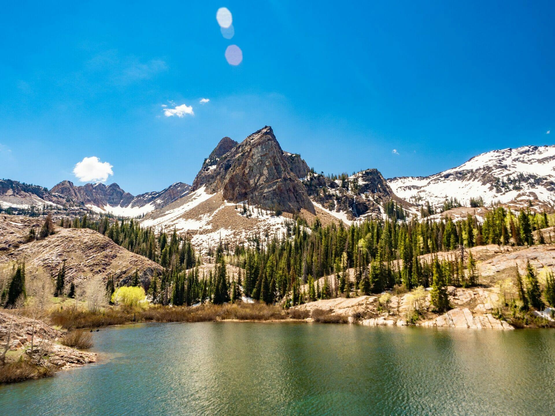 Lake Blanche hike moose Salt Lake City Wasatch Mountains