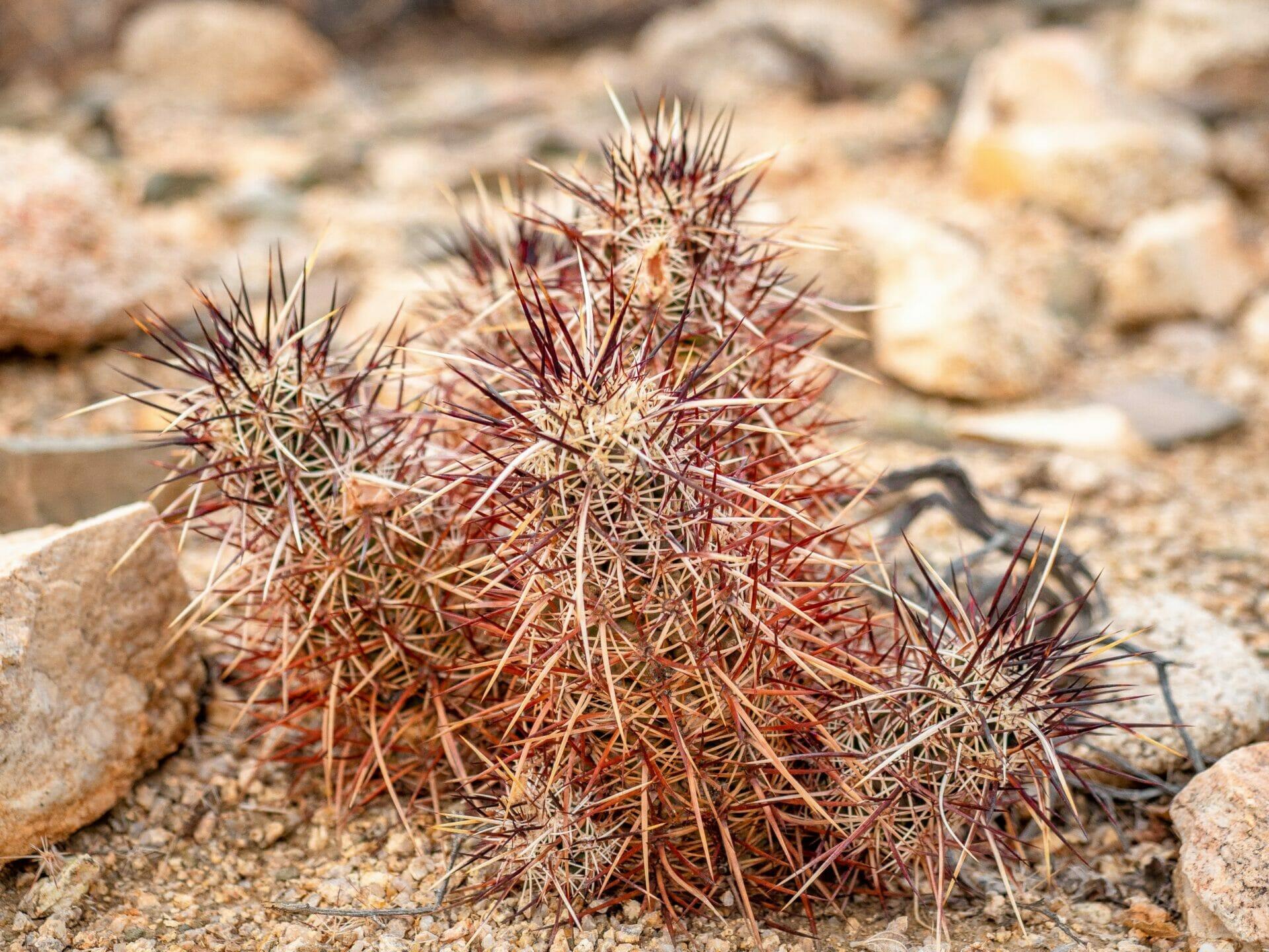 Joshua Tree National Park 1-day hiking itinerary