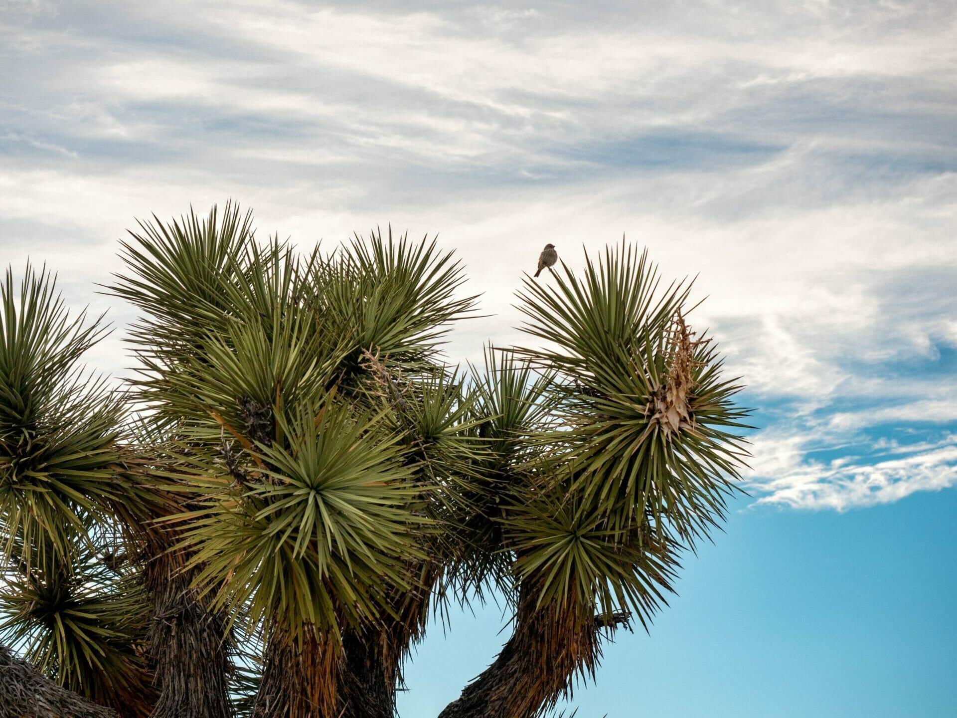 Joshua Tree National Park 1-day itinerary