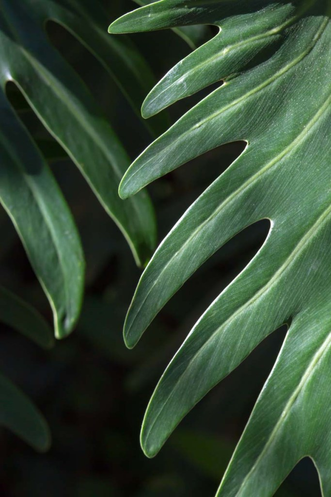 Green and Black Tropical Leaves