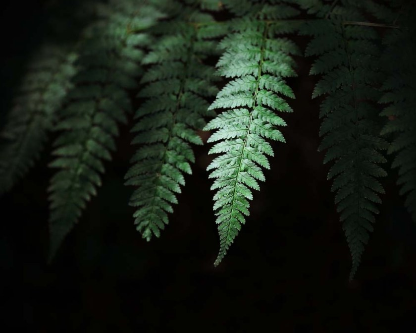 dark fern print, green and black fern art print, botanical art, nature photography