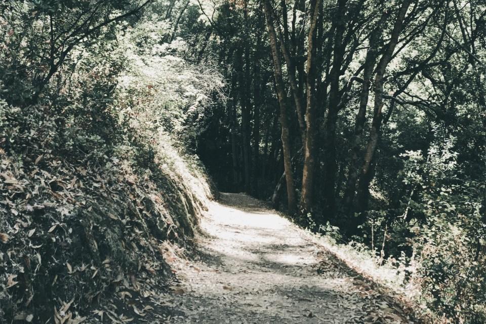 pathway into the dark