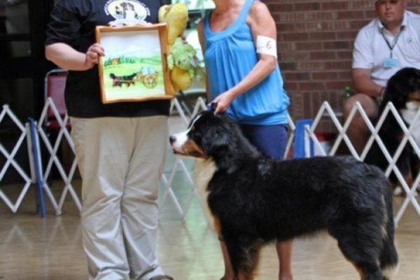 About Brookhills Bernese Mountain Dogs Illinois Bernese