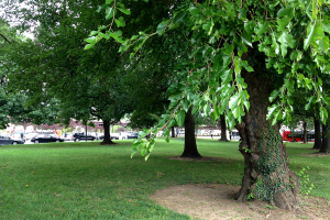 The Brookland Green at the metro station