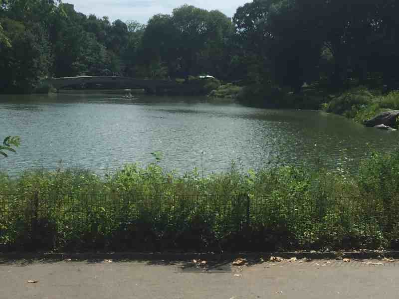 Central Park is just so beautiful!