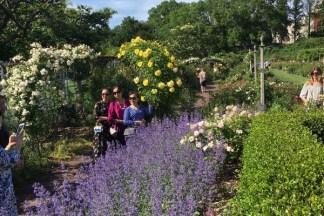 Brooklyn Botanic Garden Memorial Day 2016 - Brooklyn Archive