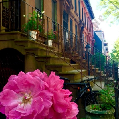 Clinton Hill, June 2017 - Brooklyn Archive