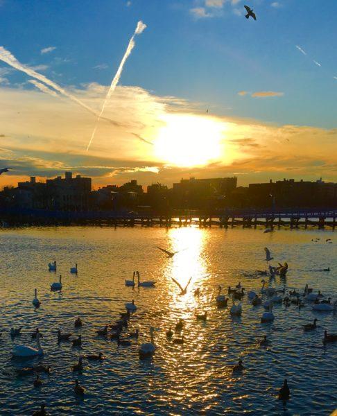Come See Birdland Aka Sheepshead Bay Brooklyn Daily Eagle