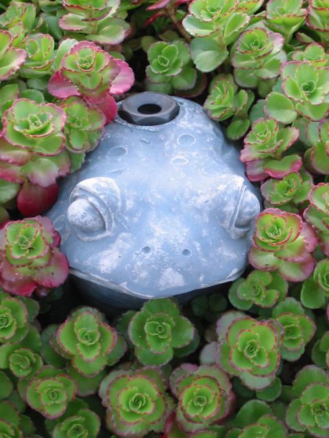 frog and sedum roof garden