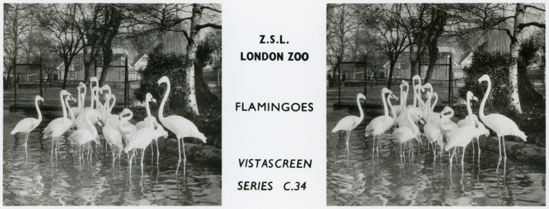 LondonZoo002