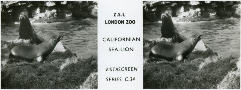 LondonZoo003