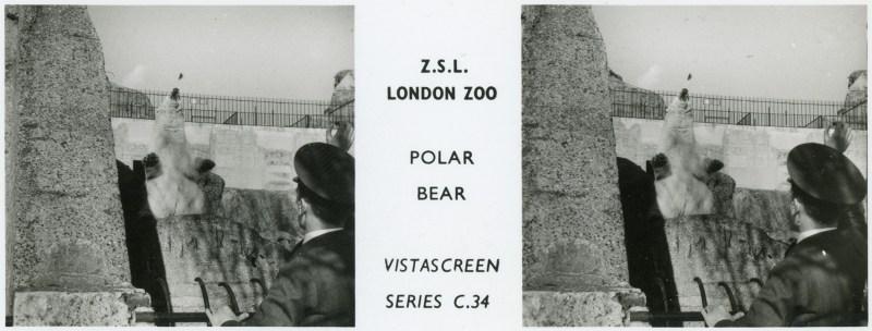 LondonZoo004