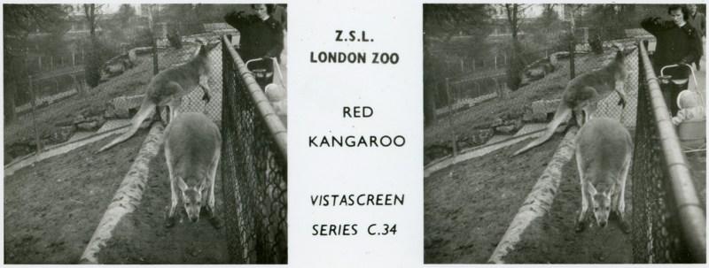 LondonZoo008