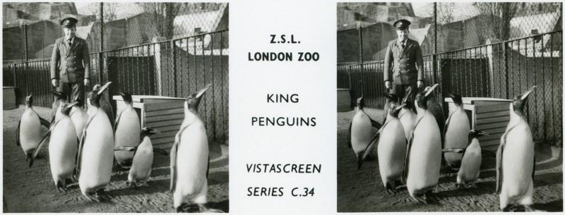 LondonZoo010