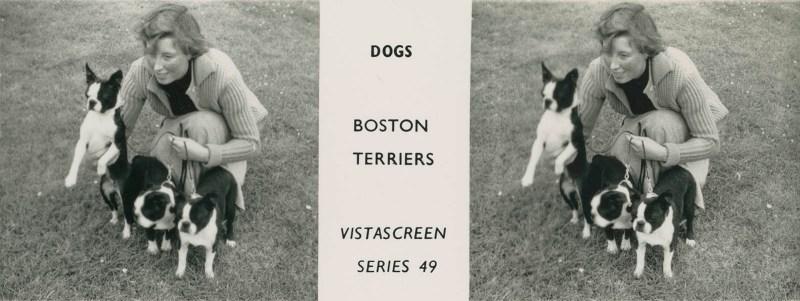 "Series 49 ""Dogs"" - Boston Terriers"