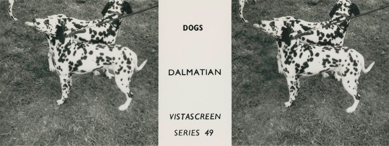 "Series 49 ""Dogs"" - Dalmation"