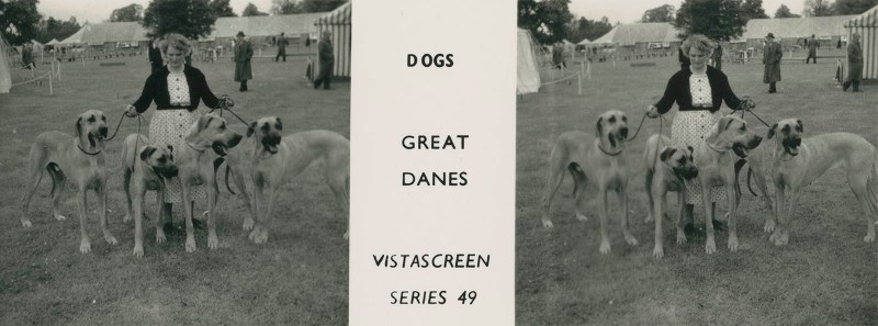 "Series 49 ""Dogs"" - Great Danes"