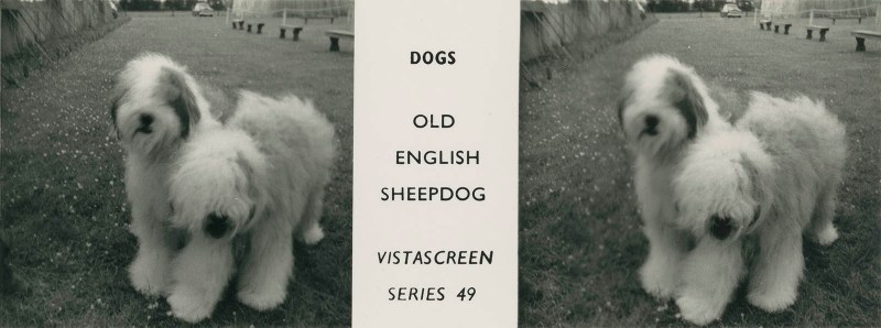 """Series 49 """"Dogs"""" - Old English Sheepdog"""