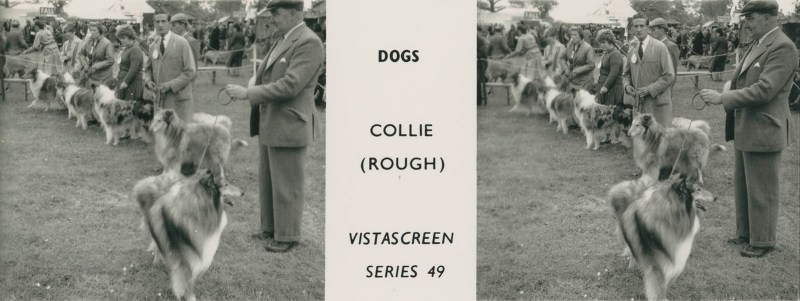 """Series 49 """"Dogs"""" - Collie (Rough)"""