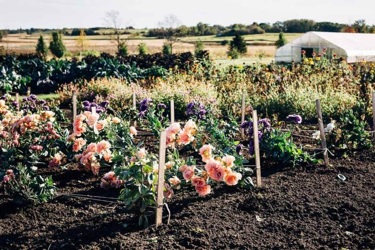 Visiting Sub-Zero and Wolf's Harvest Haven barn and garden in Fitchburg, Wisconsin