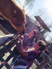 I fed a camel once.  It clearly made me happy.