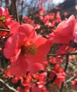 pink-bud