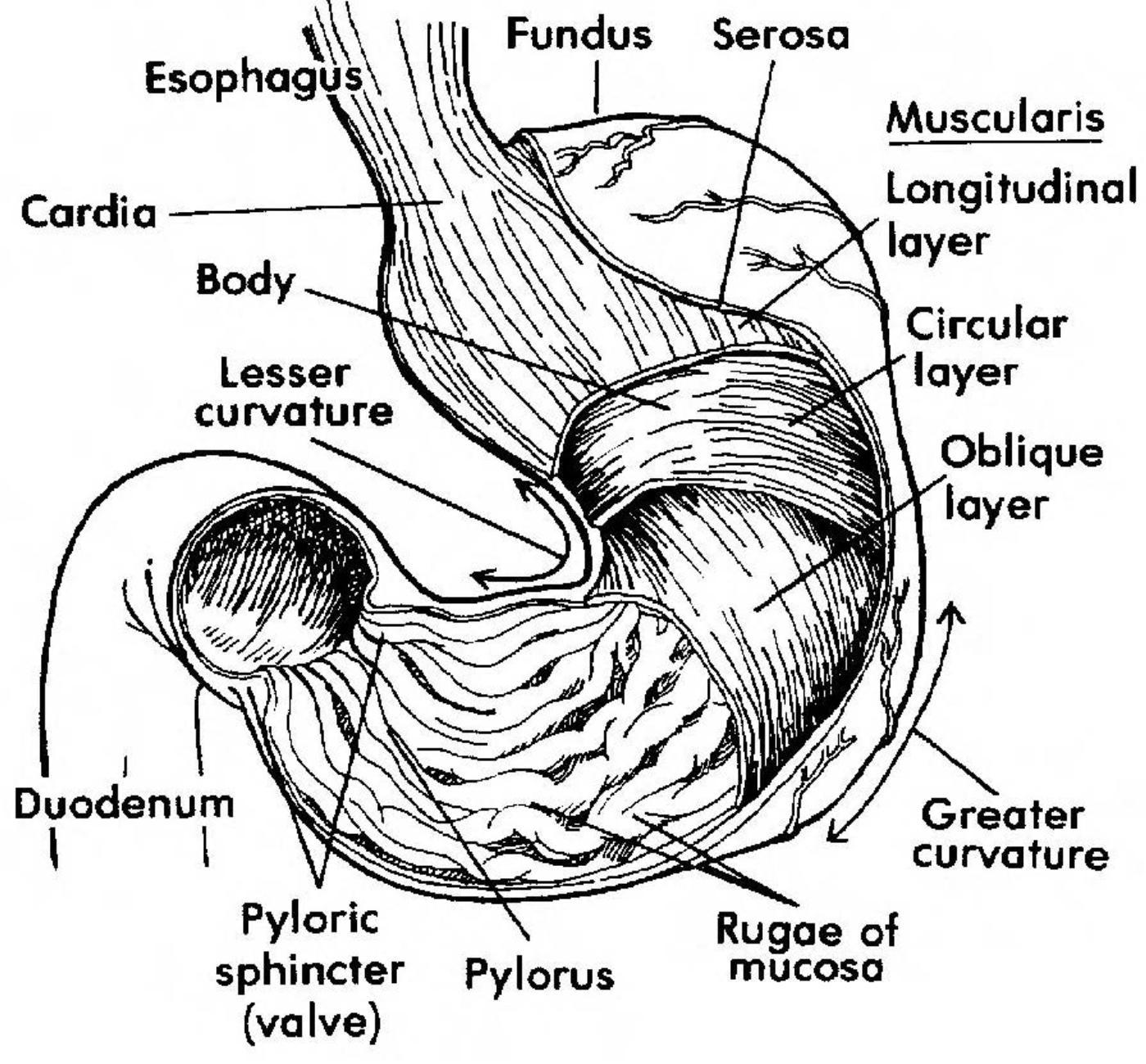 Images 06 Digestive System
