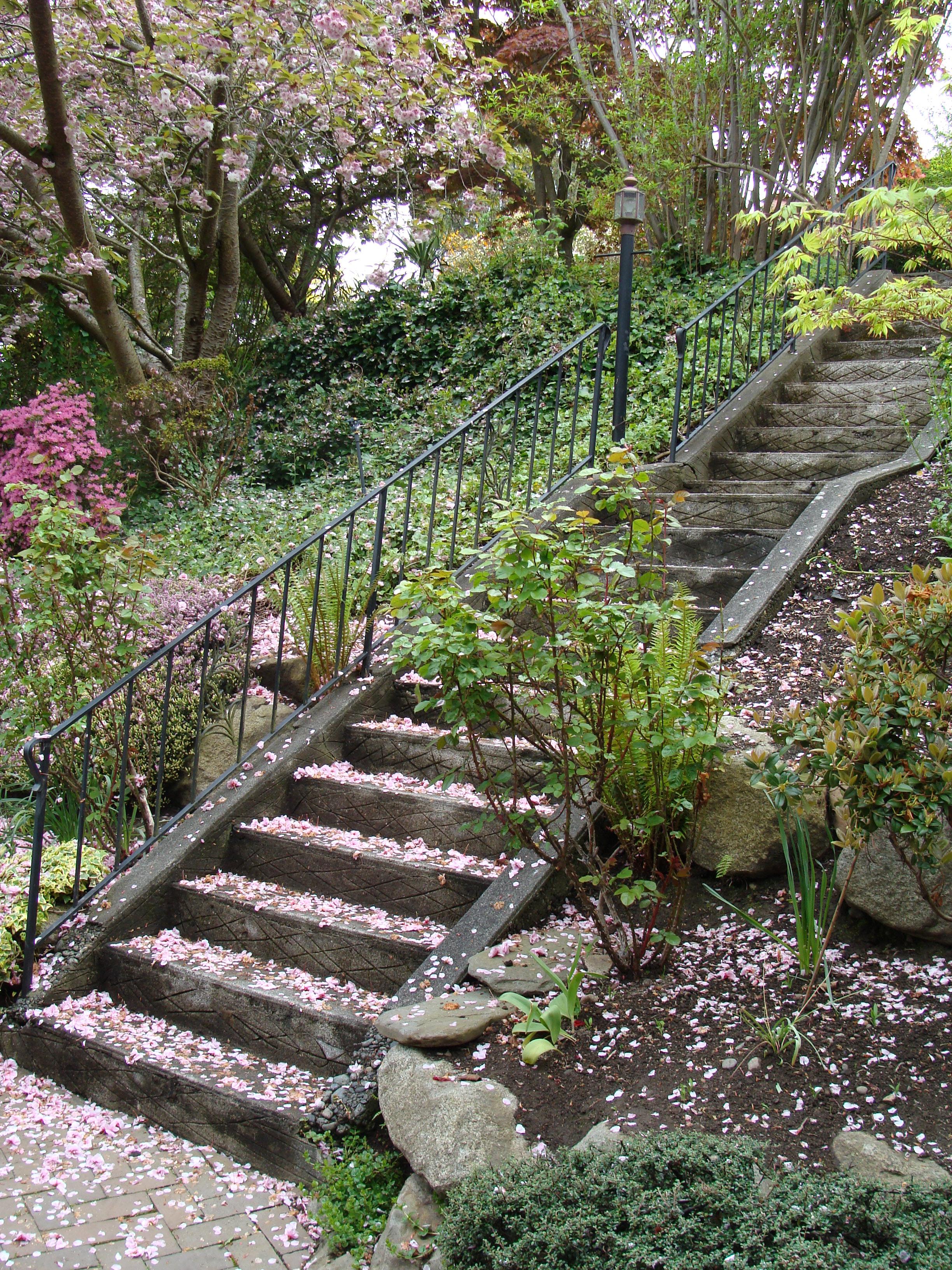 hillside gardening | Brooks Kolb LLC - Seattle Landscape ... on Backyard Hill Landscaping Ideas  id=39891