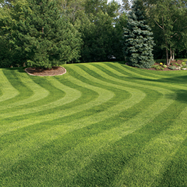 <p>Hassle-free lawn mowing, trimming, blowing services to take the stress out of your lawn.</p>
