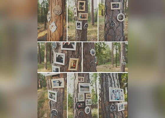 Pictures in a Tree