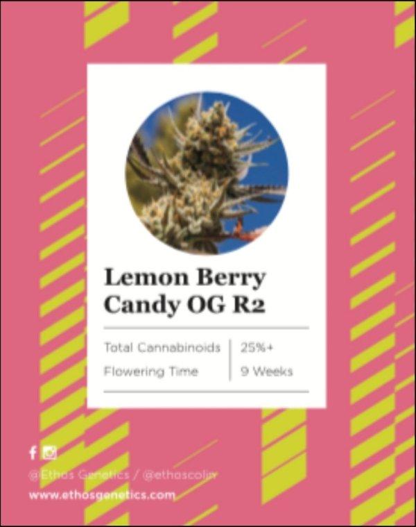 Ethos - Lemon Berry Candy OG R2