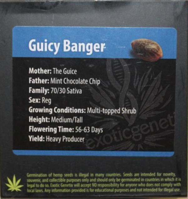 Exotic Genetix - Guicy Banger (Reg M/F)