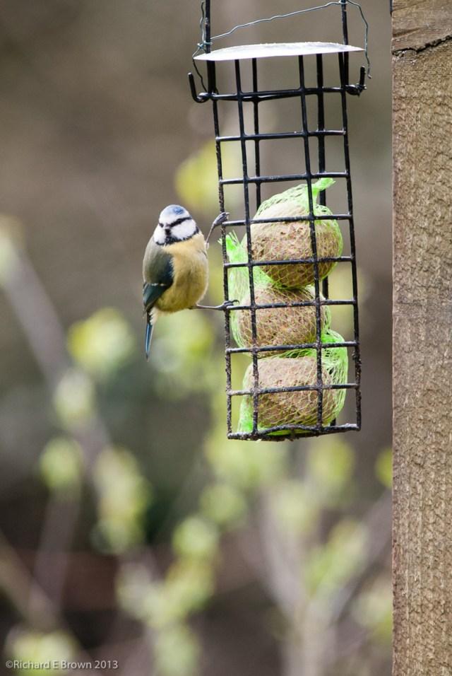 Bird Life-2