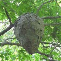 hornet-nest-1