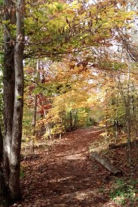 Fall in Yellowwood