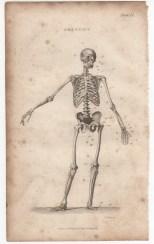 Anatomy, Portable Encyclopaedia, 1826