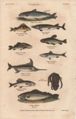 Pisces, Plate 2, London Encyclopaedia, Vol. 17, 1829