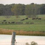 Judge stays county manure handling ordinance