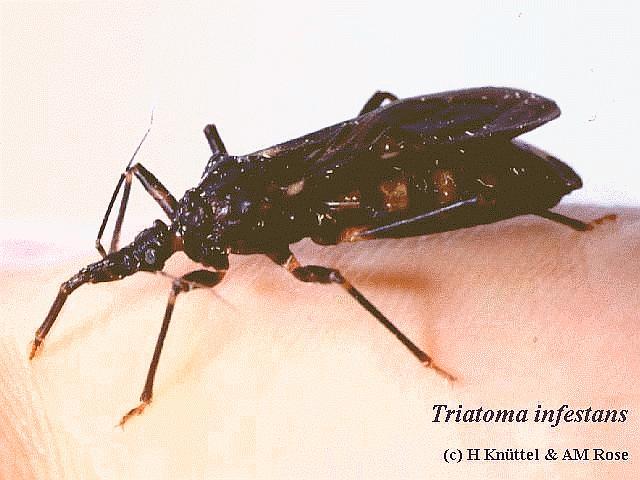 Parasites Human Cycle Skin Life