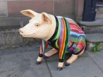 Lichfield Festival pig