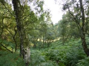 Gorse Covert, Cannock Chase